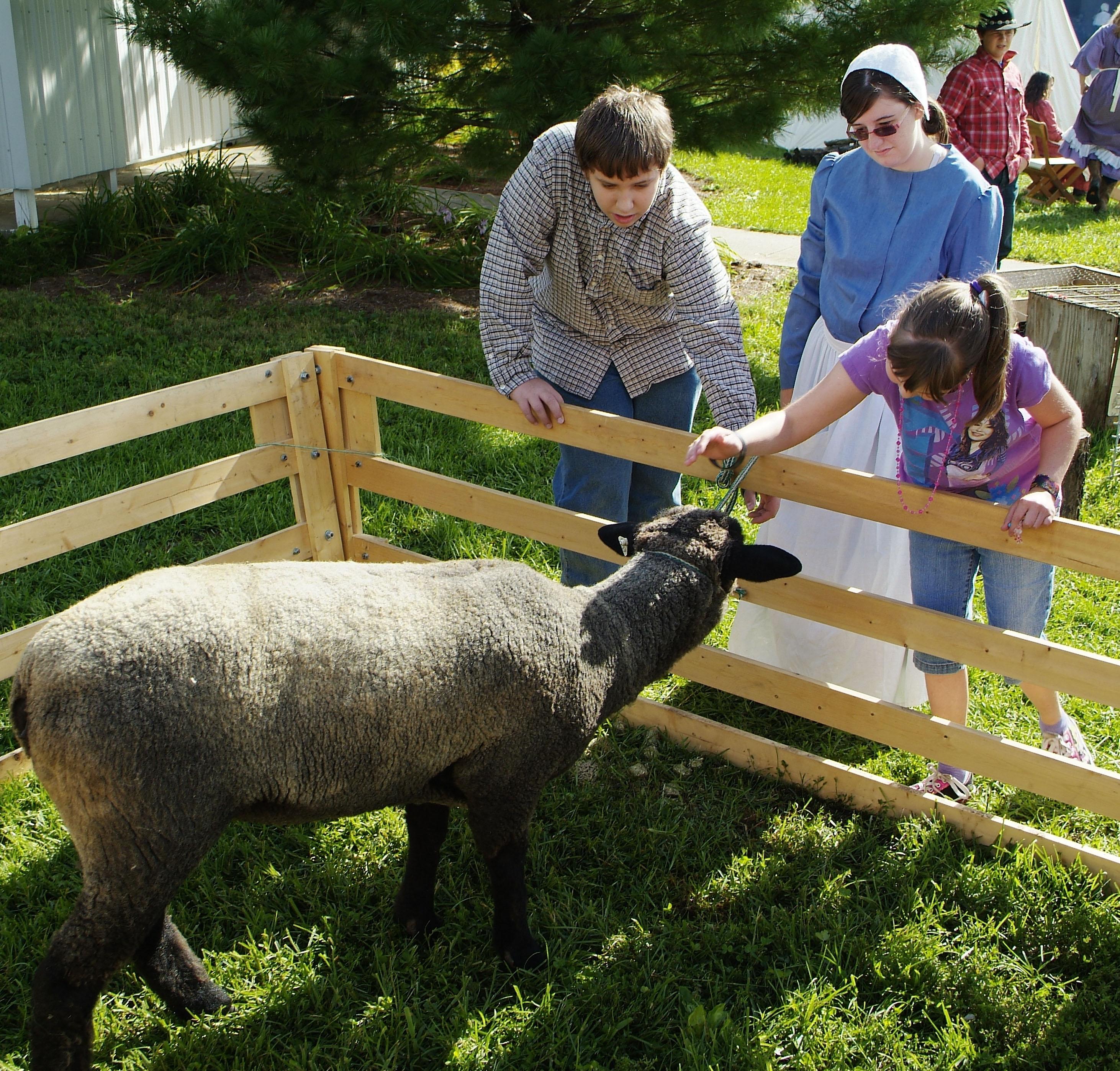 Pioneer Fair- Petting Zoo
